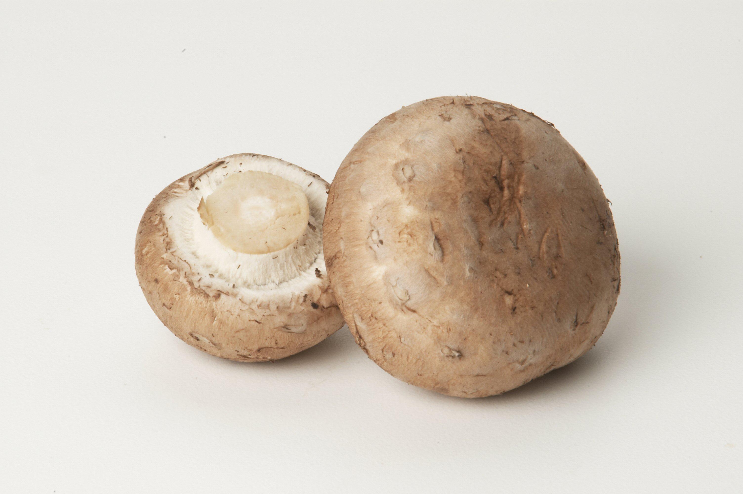 Mushroom Crimini