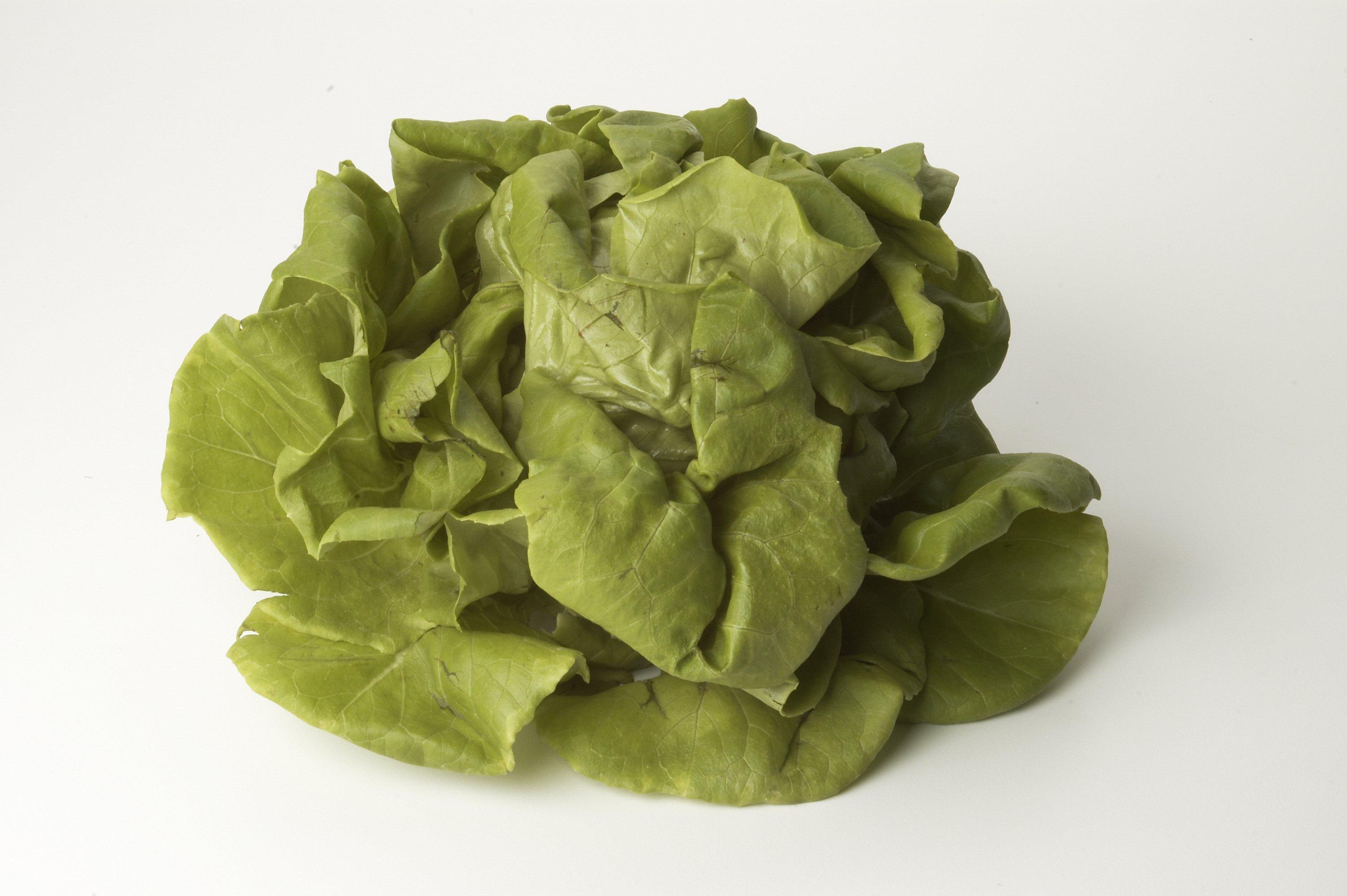 Lettuce Boston